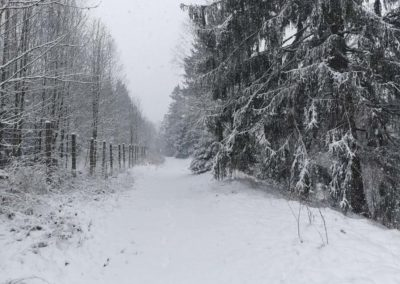 FeWo-Harz-Altenau-Winter-Schnee_0001