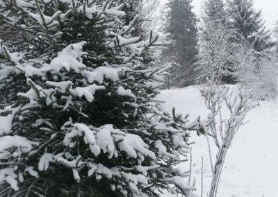 FeWo-Harz-Altenau-Winter-Schnee_0004