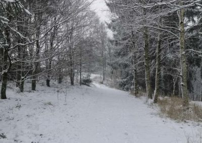 FeWo-Harz-Altenau-Winter-Schnee_0007