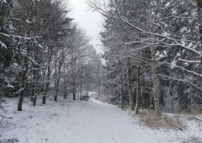 FeWo-Harz-Altenau-Winter-Schnee_0008