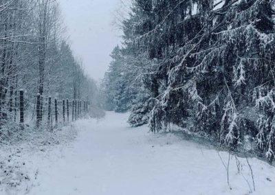 FeWo-Harz-Altenau-Winter-Schnee_0011